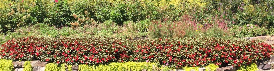 floral-rock-scene-copy